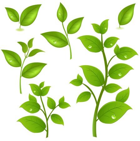 germinados: Colecci�n de ramas verdes, aislada en fondo blanco, ilustraci�n vectorial