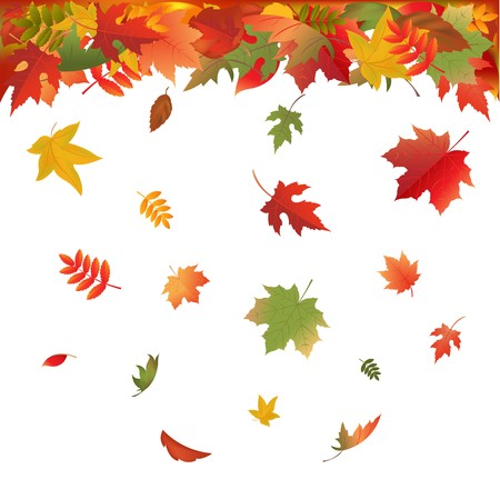 falling leaves: Autumn Falling Leaves, Isolated On White Background, Vector Illustration