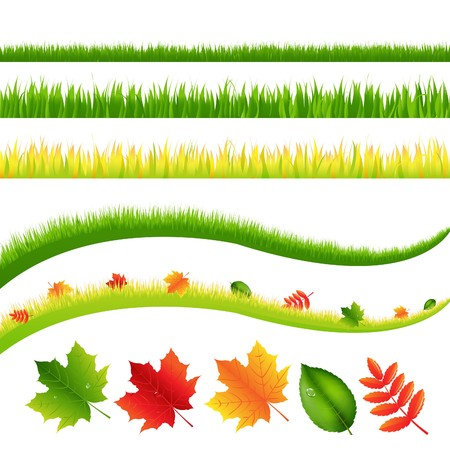 hedge trees: Grass And Leaves Set, Isolated On White Background, Vector Illustration
