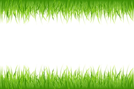 Grass On White Background, Vector Illustration Stock Vector - 8115140