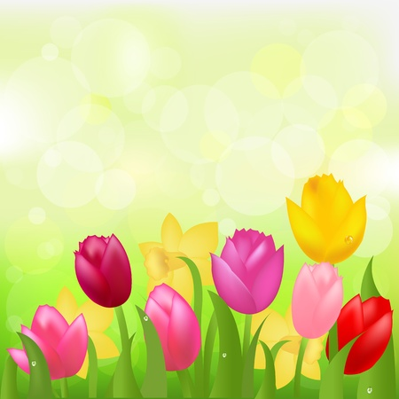 Multicolored Tulips And Narcissuses, Vector Illustration