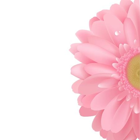 gerbera daisy: Gerbera Rosa, aislado sobre fondo blanco, ilustraci�n vectorial
