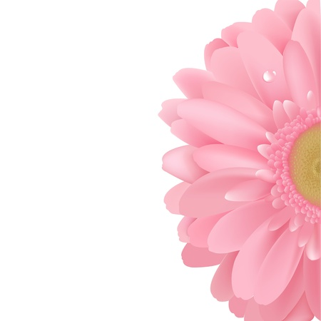 Pink Gerbera, Isolated On White Background, Vector Illustration Vector