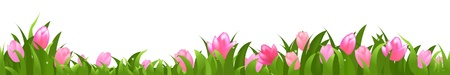 rows: Tulips Panorama, Isolated On White Background, Vector Illustration Illustration