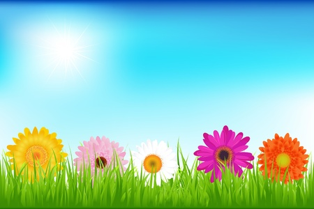 5 Bright Flowers  With Grass, Blue Sky, Vector Illustration Vector