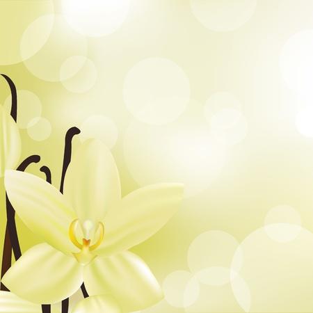 flor de vainilla: Flor de vainilla, ilustraci�n vectorial Vectores