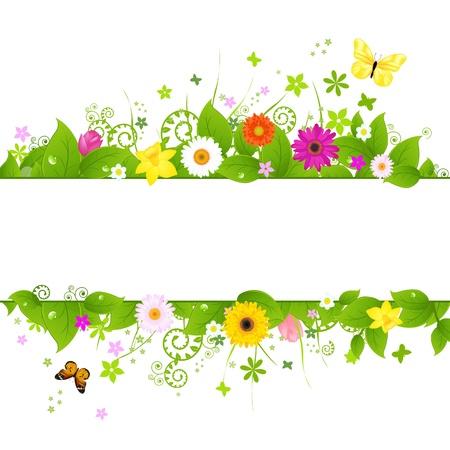 gerbera daisy: Fondo de primavera, aislado sobre fondo blanco, ilustraci�n vectorial Vectores