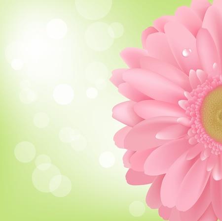 camomiles macro: Pink Gerbera