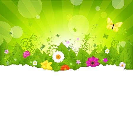 fragmentary: Fondo de naturaleza con flores, aislado sobre fondo blanco, ilustraci�n