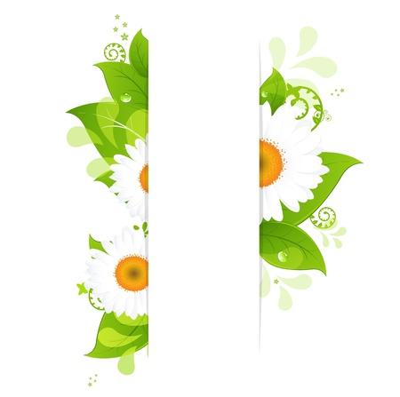 gerbera daisy: Fondo natural con Camomiles, aislado sobre fondo blanco, ilustraci�n Vectores
