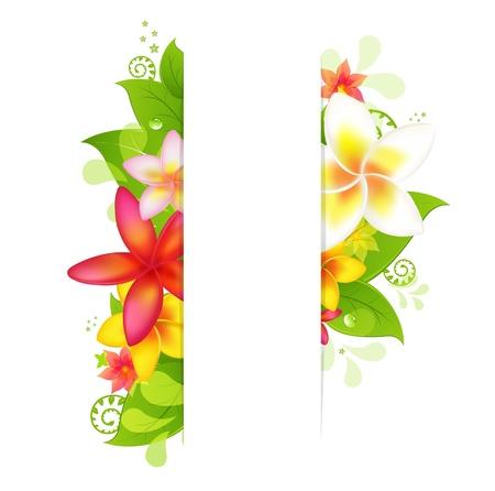 hawai: Fondo natural con Plumeria, aislado sobre fondo blanco, ilustraci�n Vectores