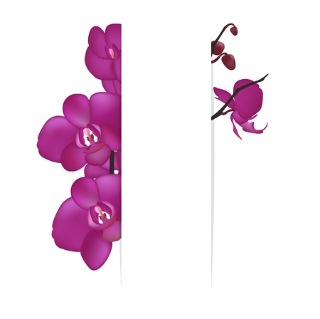 Background With Orchids, Isolated On White Background, Vector Illustration Vector