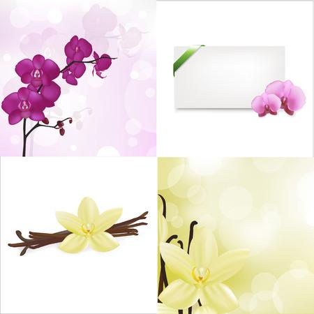 flor de vainilla: Orquídeas, vainilla establecido y en blanco la etiqueta de regalo con la cinta verde de raso, aislada sobre fondo blanco, ilustración vectorial Vectores