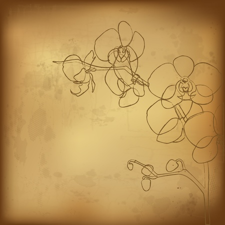 Orchid And Old Paper, Vector Illustration Vector