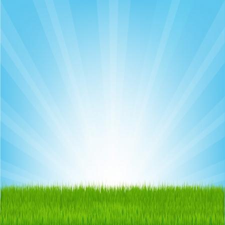 praterie: Campo di erba, illustrazione vettoriale Vettoriali