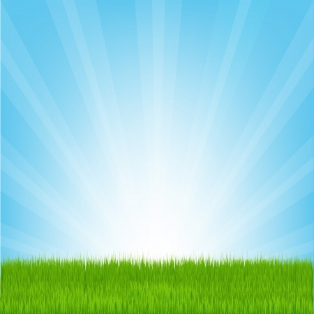 sunlight sky: Field of Grass, Vector Illustration