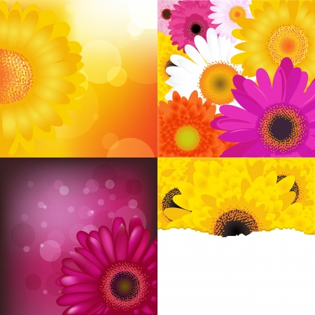 red gerber daisy: Flower Backgrounds Set.