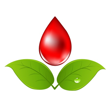 Blood Drop With Leafs, Isolated On White Background, Vector Illustration Vector