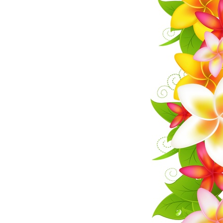 frangipani flower: Tropical Flowers Frangipani, Isolated On White Background, Vector Illustration