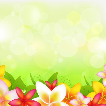 frangipani: Natural Background With Garland From Plumeria, Vector Illustration  Illustration