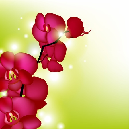 Pink Orchids With Blur, Vector Illustration Vector