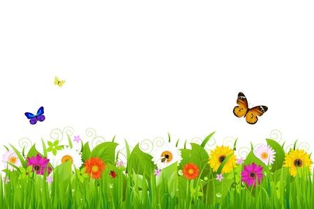 camomiles macro: Fresh Nature Landscape, Vector Illustration Illustration