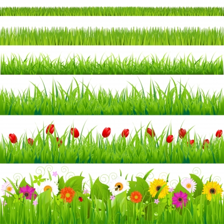 Big Grass And Flower Set, Isolated On White Background, Vector Illustration
