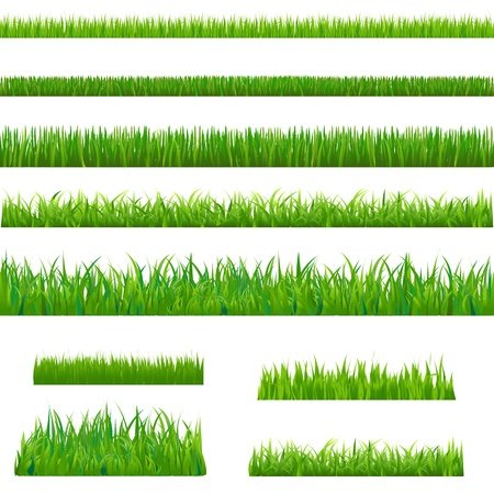 Big Green Grass, Isolated On White Background, Vector Illustration
