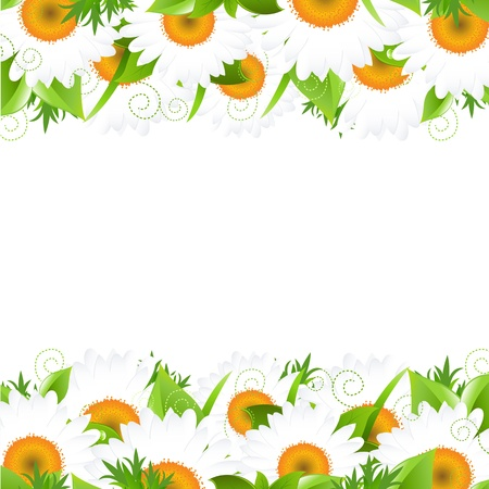 camomiles macro: Camomile And Leaves Border, Vector Illustration