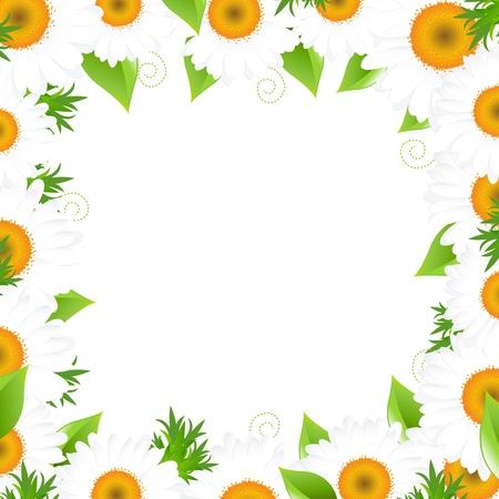 camomiles macro: Camomile Border, Isolated On White Background, Vector Illustration   Illustration