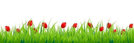 grass border: Tulip Border, Isolated On White Background