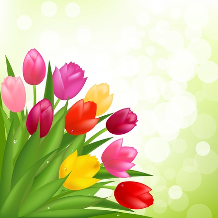 Bouquet Of Tulips Illustration Vector