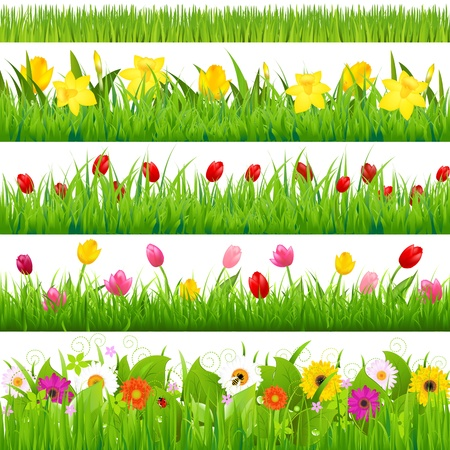 bee on white flower: Flower Borders Set Illustration