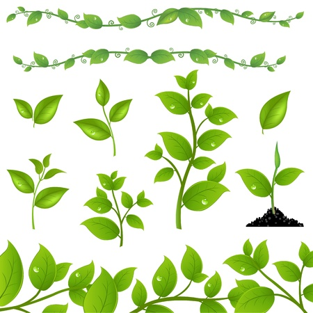 Set Of Green Leaves And Sprouts, Isolated On White Background, Vector Illustration Vector