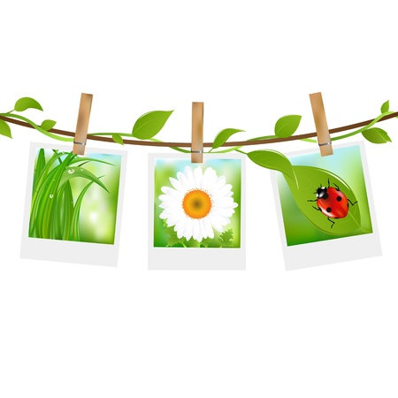 photography backdrop: Summer Photos With Clothespins, Isolated On White Background Illustration