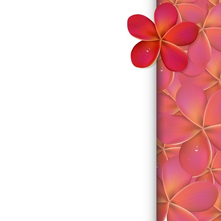 pink plumeria: Banner With Pink Frangipani Flowers, Vector Illustration