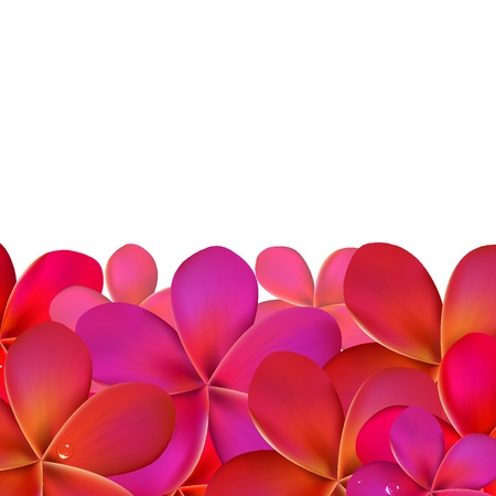 tropical border: Pink Frangipani With Border, Isolated On White Background, Vector Illustration