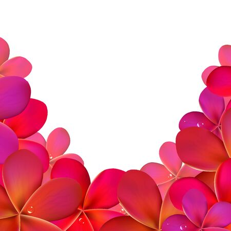 Pink Frangipani Frame, Isolated On White Background, Vector Illustration Vector