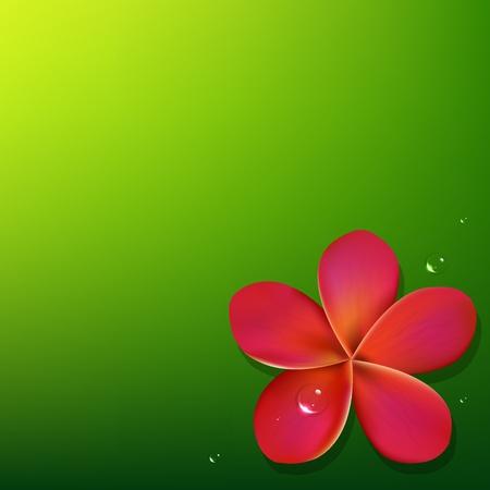 bali: Pink Frangipani With Green Background, Vector Illustration Illustration
