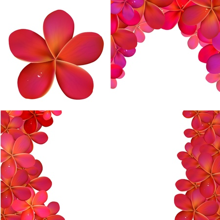 frangipani: Pink Frangipani Set For Design Illustration Illustration
