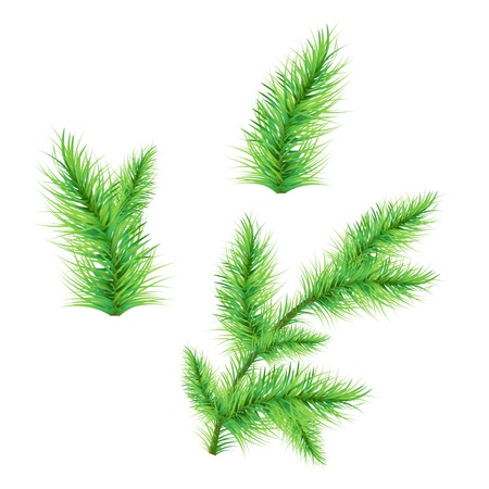 Fir-Tree Branch Isolated On White Background, Vector Illustration Stock Vector - 16449038