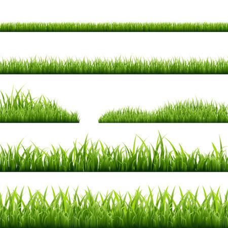 6 Grass Borders, Vector Illustration Vettoriali