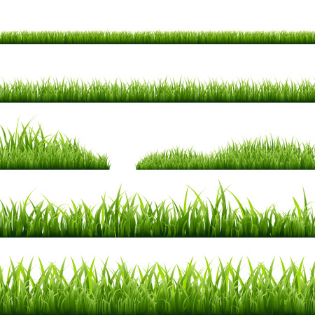 6 Grass Borders, Vector Illustration Çizim