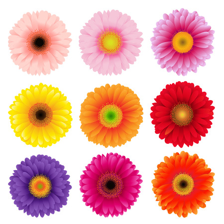 closeup of pink daisy with: Big Colorful Gerbers Flowers Set, Vector Illustration