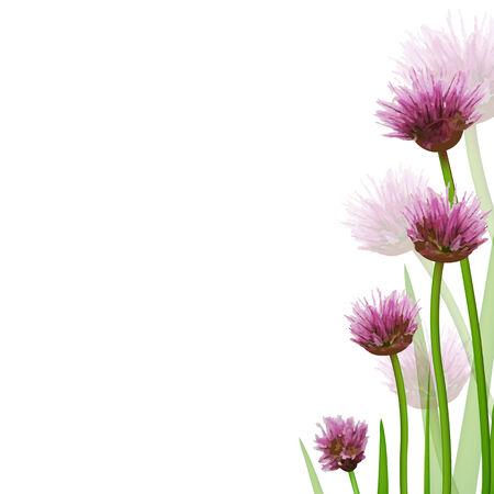 allium: Flower Border, Isolated On White Background Illustration