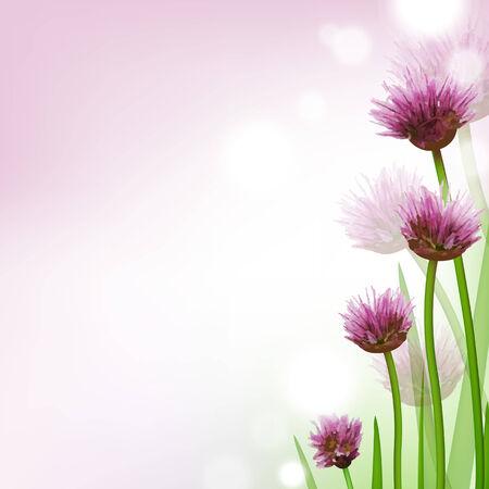 allium: Allium, Flower Card, With Gradient Mesh Illustration Illustration