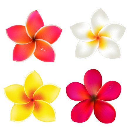 Color Frangipanis Set, With Gradient Mesh, Vector Illustration