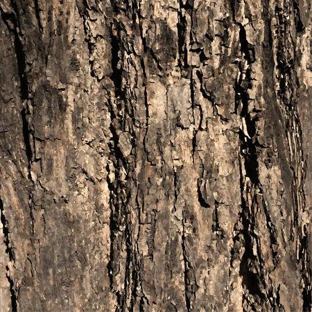 tree bark: Vector Wood Texture, Vector Illustration