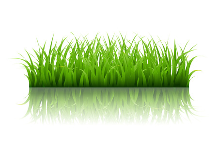 grass border: Green Grass Border With Gradient Mesh, Vector Illustration Illustration