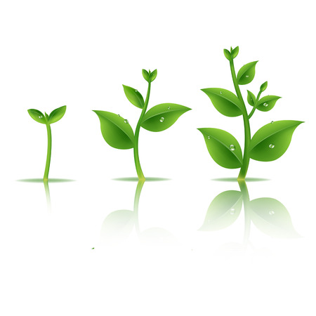 Plant Set With Gradient Mesh, Vector Illustration Vector